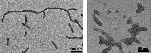 The cylindrical superstructures are composed of silver nanoparticles with V-shaped amphiphilic arms. The short rod-like and spherical assemblies are made of gold nanoparticles with the same V-shaped amphiphilic arms.  The self-assembly occurs upon slow addition of water to solution of nanoparticles in organic solvent called tetrahydrofuran. The resulting mixture is then dialyzed against pure water in order to remove organic solvent and obtain a pure aqueous solution of the superstructures (they remain in water without any precipitation, just like micelles).