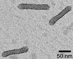 This electron microscope image clearly shows the tightly packed cylinders of gold nanoparticles.